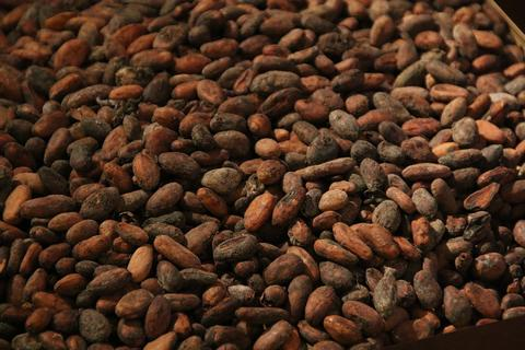The story of cocoa beans